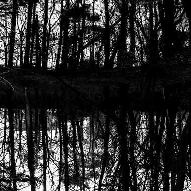 La forêt au miroir par sylmorg