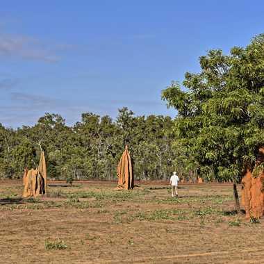 Champ de termitières par rmgelpi