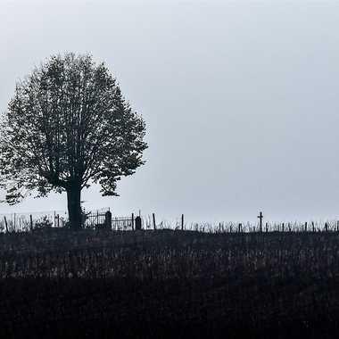L'arbre du Chatelard par patrick69220