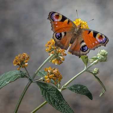 Beauté naturelle par Dav.sv