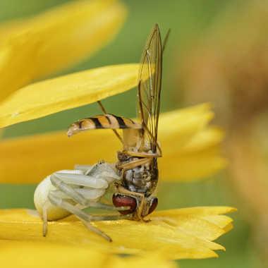 Mortel poirier par Nikon78