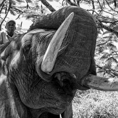 L'homme et l'éléphant par patrick69220