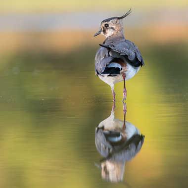l'aristocrate de l'étang par jeromebouet