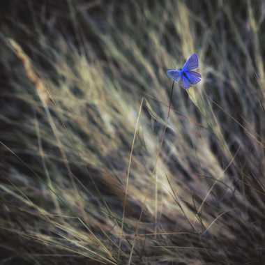 Une petite pointe ... de bleu. par FredoRoiDuVelo