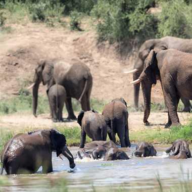 Le bain des éléphants par patrick69220