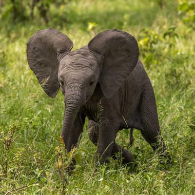 Dumbo par patouphoto