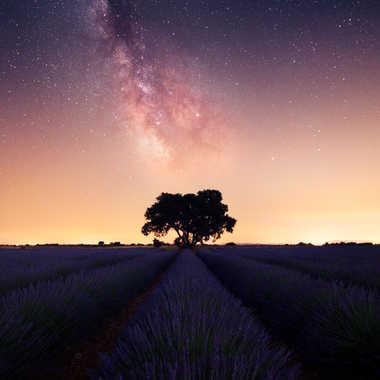 Lavender Space  par AlexM