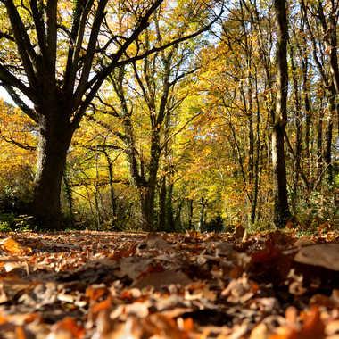 Les feuilles mortes se ramasse........ par clero