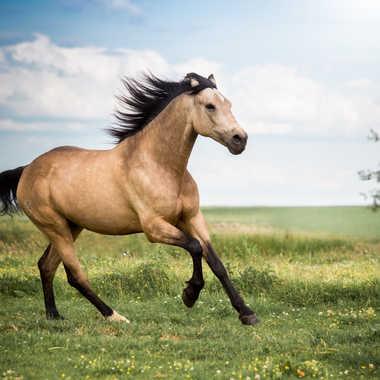 Horse par Bourgeois Adrien