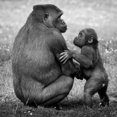 love me, tender.. love me sweet par Damien Godin