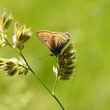 papillon par eauderose