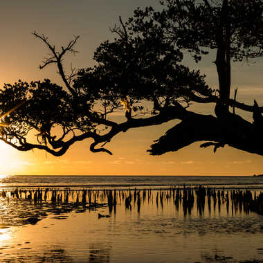 Mangrove par Jbmayotte