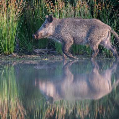 Miroir d'étang par jeromebouet