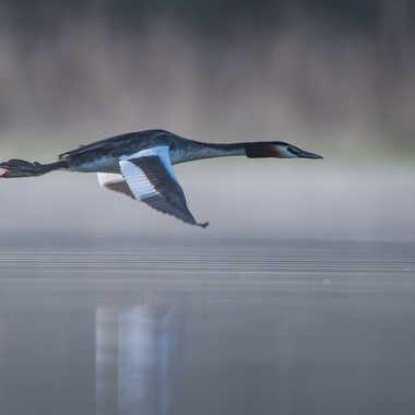 Vol au dessus de l'étang par jeromebouet