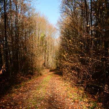 Chemin forestier par mamichat