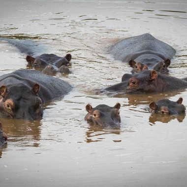 La famille hippo par patrick69220