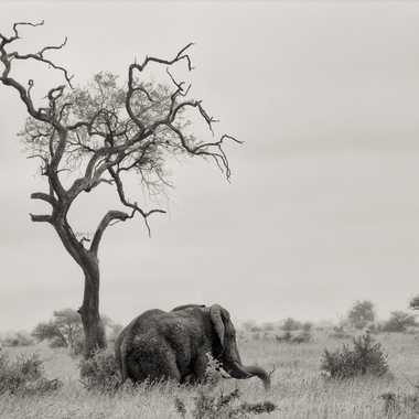 L'arbre et l'éléphant par patrick69220