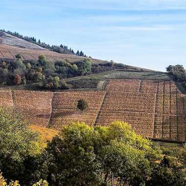 Les vignes de Chiroubles par patrick69220