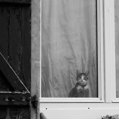 Petit curieux par serge_6632