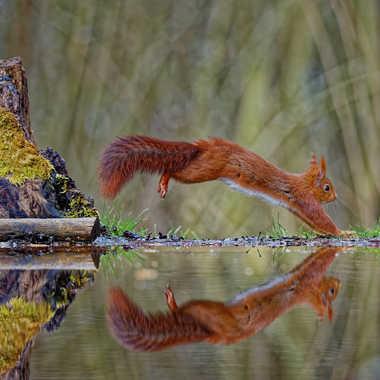 Le saut de l'écureuil par NC76