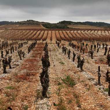 géométrie de la vigne par gabrasil