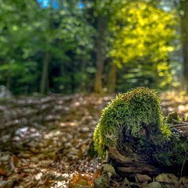 Petit matin en forêt par Philoupi