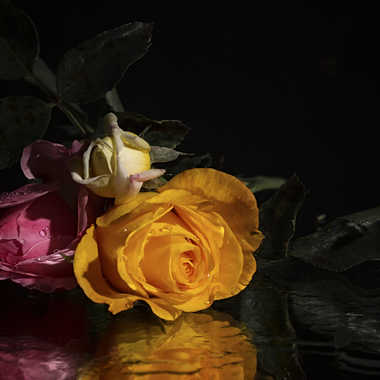 Dites le avec des fleurs par patrick69220