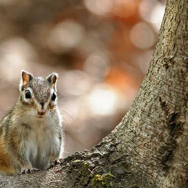 J'ai entendu tomber une noisette ...! par Nikon78