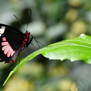 Le papillon et sa feuille par mamichat