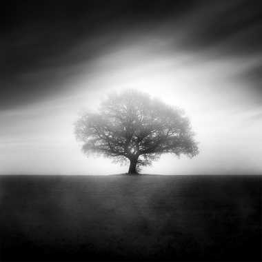 Le Chêne par MiK5370