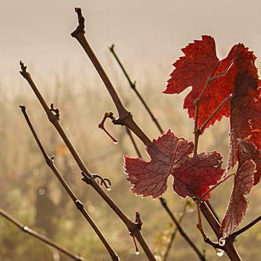 Les dernières feuilles par patrick69220