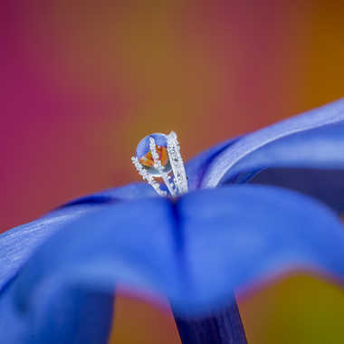 Bijou de fleur. par Franck06