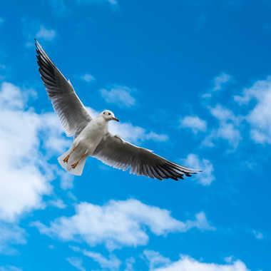 Un ange passe par Philipounien