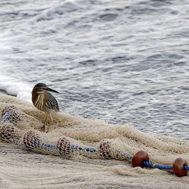 Un Kaïali sur la plage V2 Pano par Colybri