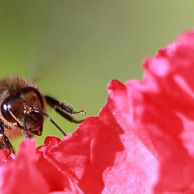 p'tit dej..pollen de pavots par FIDJIE