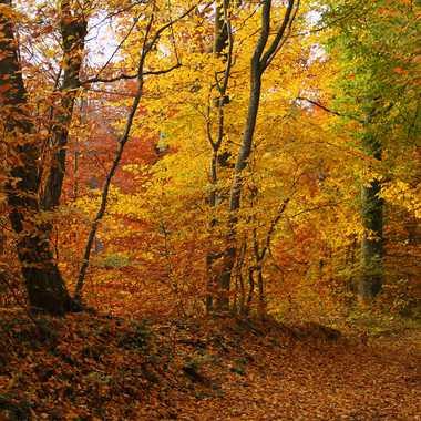 Au coeur de la forêt par Giem