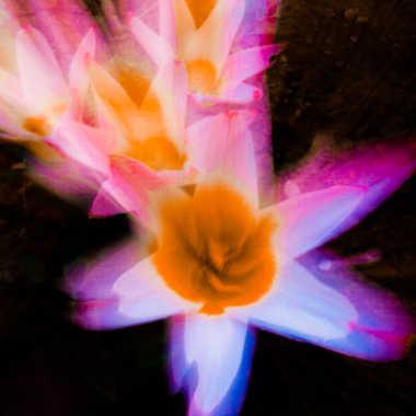 zooming  colors par brj01