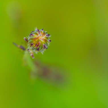 Emergence florale... par Philipounien