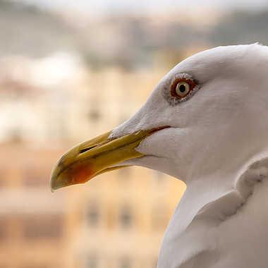 Mon plus beau profil  par Stefano