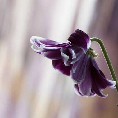 fleur fânée par genevieve_3824