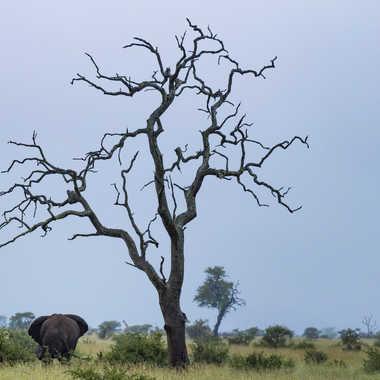 Bush africain par patrick69220