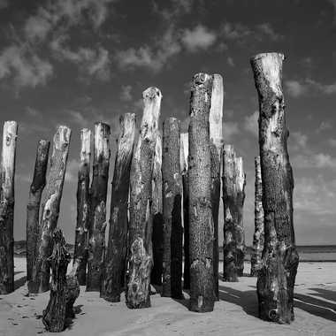 Sentinelles par Nikon78