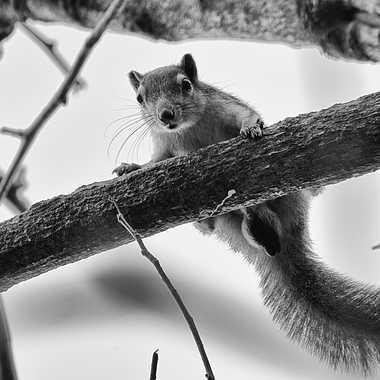 Sur un arbre perché par patrick69220