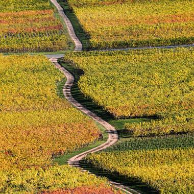 chemin dans les vignes par chouchka