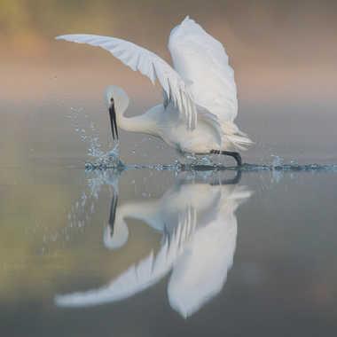 Ballet aquatique par jeromebouet