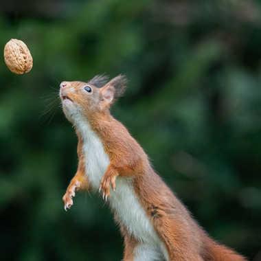 Le rêve de l'écureuil par patouphoto