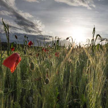 souvenir du printemps par Florent-Thierry