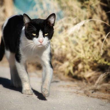 le chat des salines  par Nimo