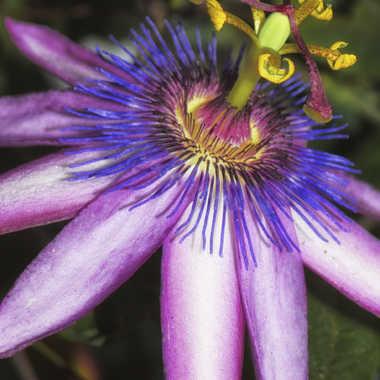 Manège florale par patrick69220