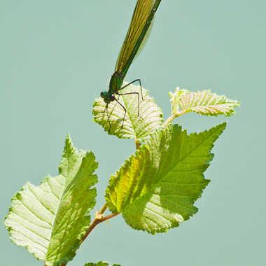 Tons de vert par Isabellefalconnet